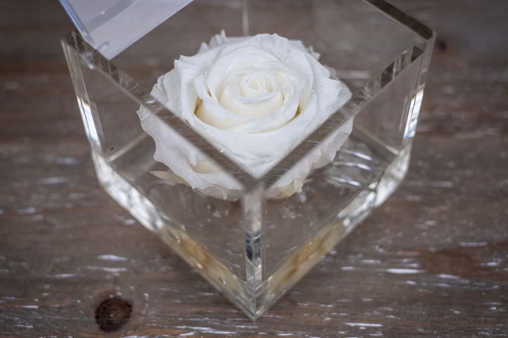 Flower Cube Rosa Bianca