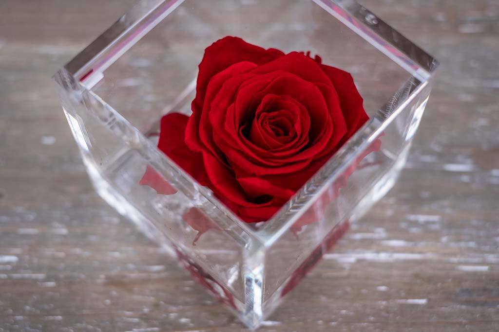 Flower Cube Rosa Rossa